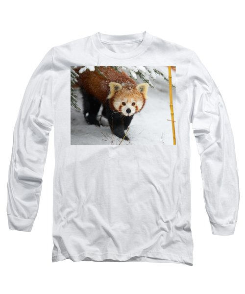 Red Panda In The Snow Long Sleeve T-Shirt