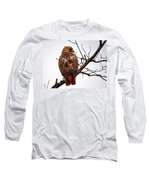 Red Tail Hawk In Winter Long Sleeve T-Shirt by Dianne Cowen