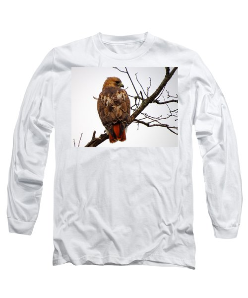 Red Tail Hawk In Winter Long Sleeve T-Shirt