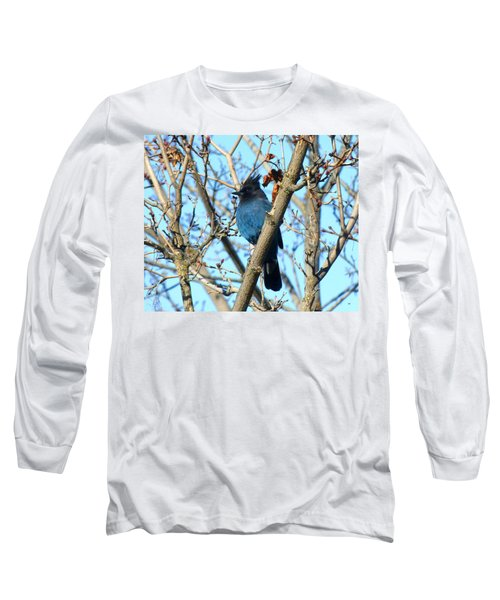 Steller's Jay In Winter Long Sleeve T-Shirt