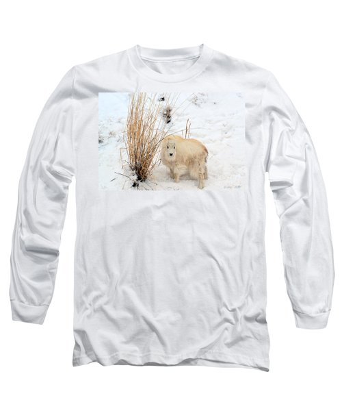 Sweet Little One Long Sleeve T-Shirt