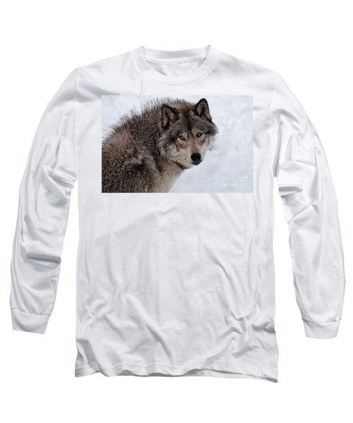 Long Sleeve T-Shirt featuring the photograph Timberwolf At Rest by Bianca Nadeau