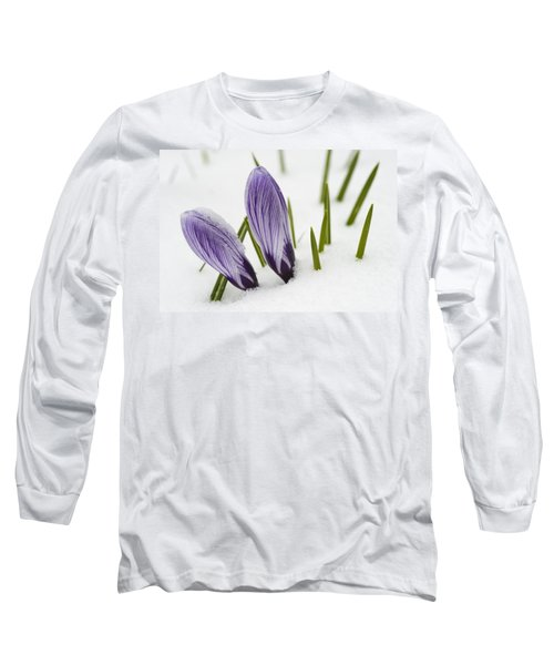 Two Purple Crocuses In Spring With Snow Long Sleeve T-Shirt