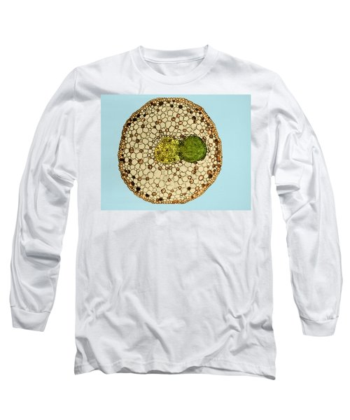 Willow Root Branch 1 Of 3 Long Sleeve T-Shirt
