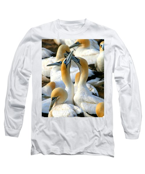 Cape Gannet Courtship Long Sleeve T-Shirt