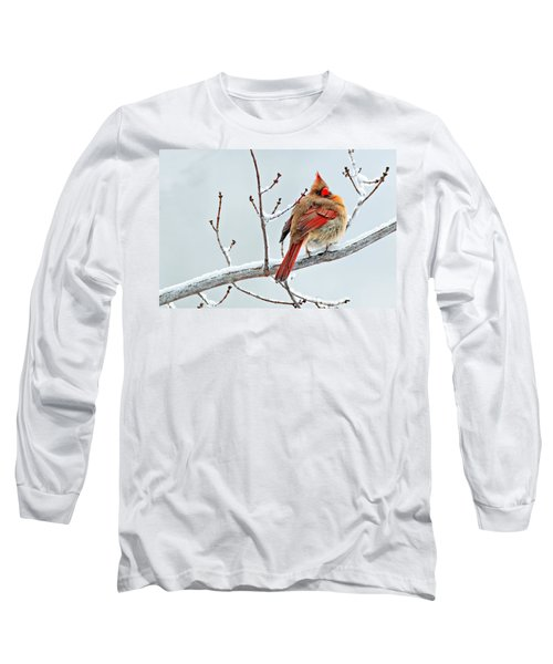 Cardinal I The Snow  Long Sleeve T-Shirt