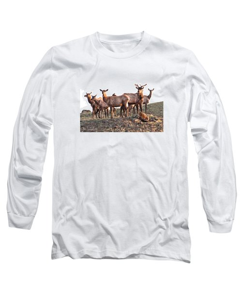 Early Morning Herd Long Sleeve T-Shirt by CR  Courson