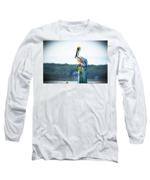 Long Sleeve T-Shirt featuring the photograph Posing Pelican by Shannon Harrington