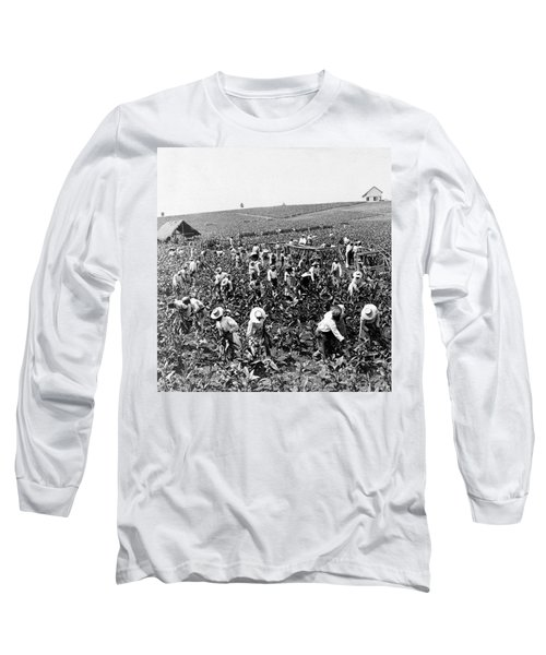 Tobacco Field In Montpelier - Jamaica - C 1900 Long Sleeve T-Shirt