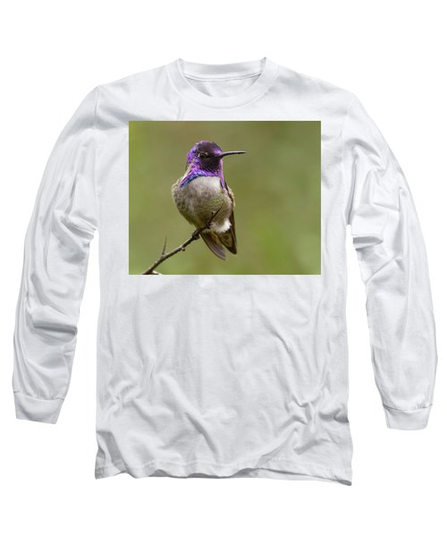 Costa's Hummingbird, Solano County California Long Sleeve T-Shirt