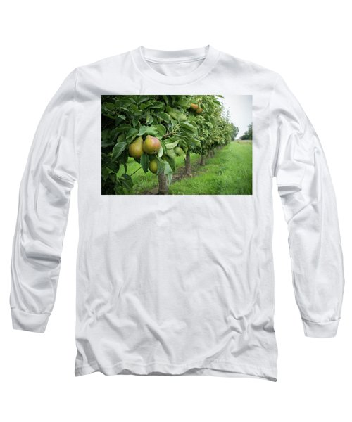 Pear Orchard Long Sleeve T-Shirt by Hans Engbers