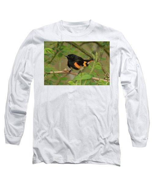 American Redstart Long Sleeve T-Shirt by Alan Lenk