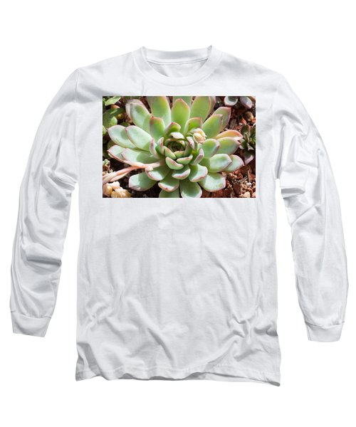A Young Succulent Plant Long Sleeve T-Shirt by Catherine Lau