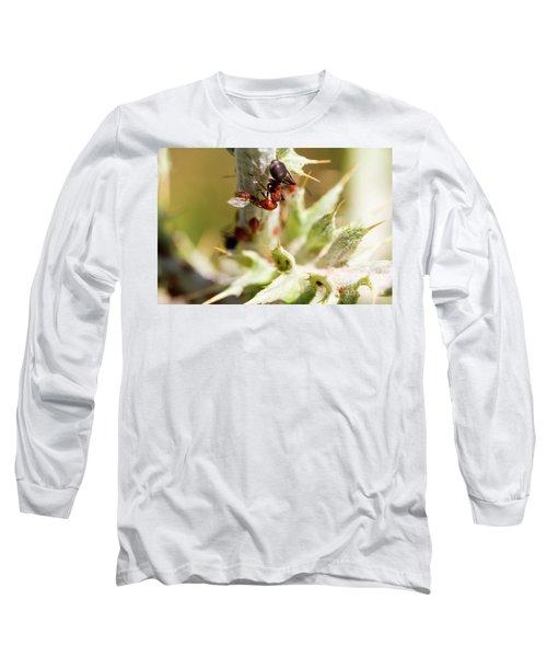 Ant Farming Long Sleeve T-Shirt