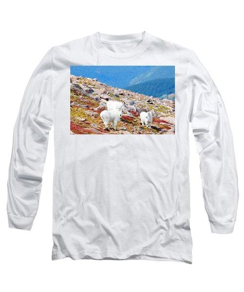 Autumn Goats On Mount Bierstadt Long Sleeve T-Shirt