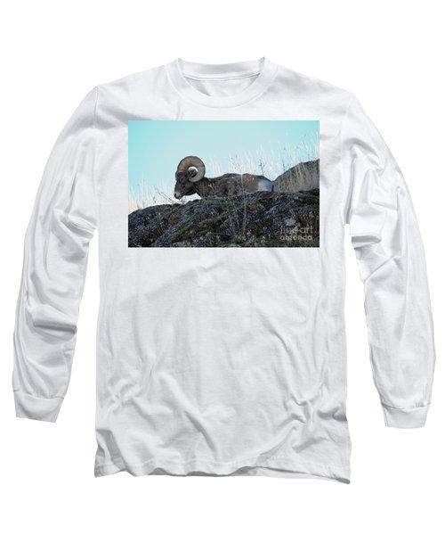 Bighorn Sheep Long Sleeve T-Shirt by Cindy Murphy - NightVisions