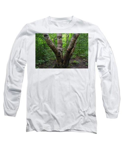 Birch Bark Tree Trunks Long Sleeve T-Shirt