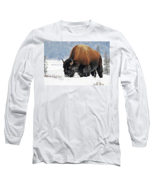 Bison Roaming In The Lamar Valley Long Sleeve T-Shirt