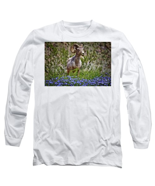 Blooms And Bighorn In Anza Borrego Desert State Park  Long Sleeve T-Shirt by Sam Antonio Photography
