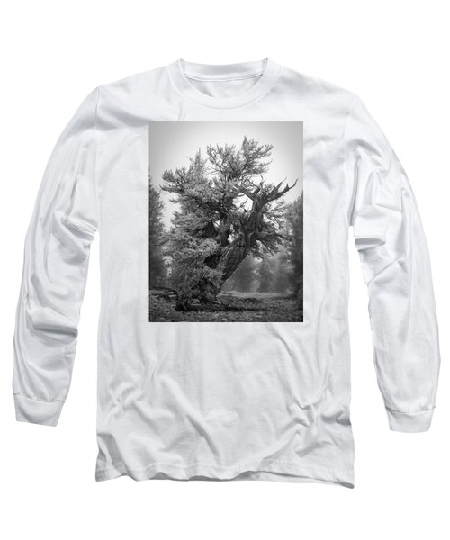 Bristlecone Beauty Long Sleeve T-Shirt
