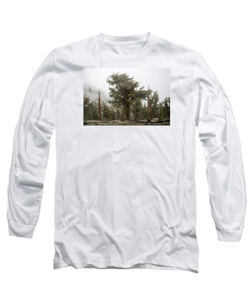 Bristlecone Elder Long Sleeve T-Shirt