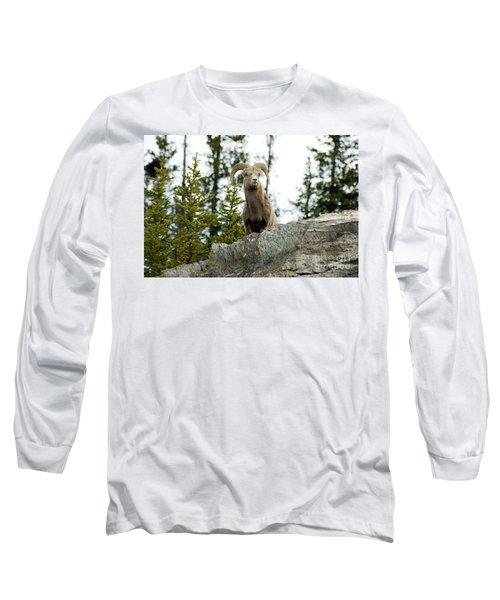 Canadian Bighorn Sheep Long Sleeve T-Shirt