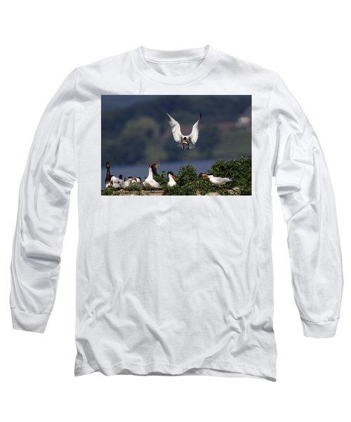 Caspian Tern Colony Long Sleeve T-Shirt by Gary Hall