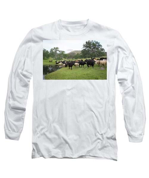 Cattle Long Sleeve T-Shirt by Diane Bohna