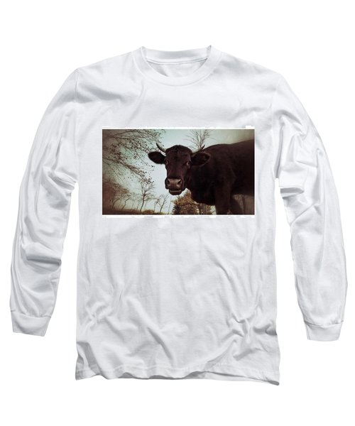 #cattle #kuh #rind #weide #herbst Long Sleeve T-Shirt