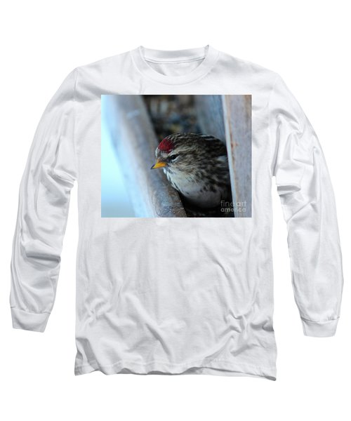 Long Sleeve T-Shirt featuring the photograph Common Redpoll by Ann E Robson
