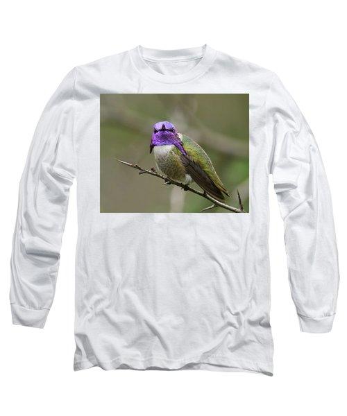 Costa's Hummingbird, Solano County California Long Sleeve T-Shirt by Doug Herr