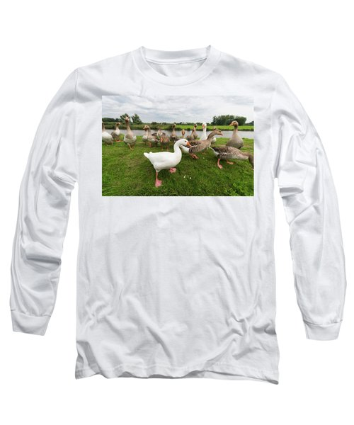 Curious Geese Long Sleeve T-Shirt by Hans Engbers