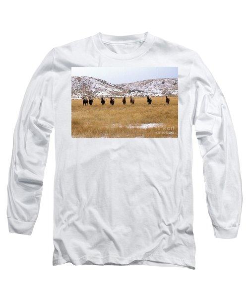 Curious Horses Long Sleeve T-Shirt