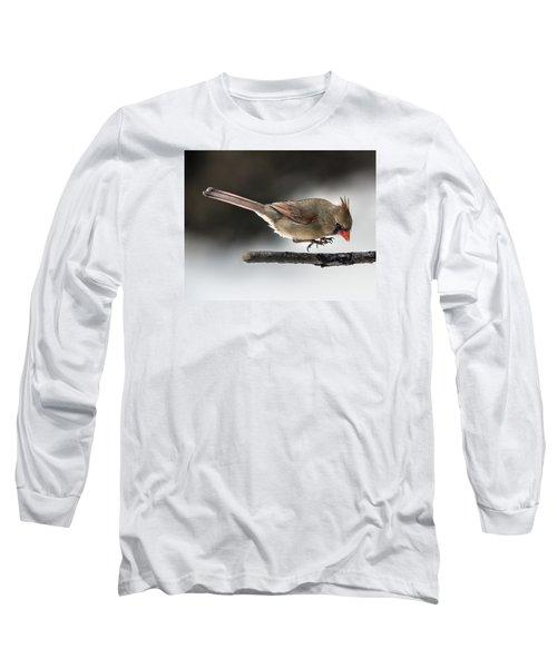 Female Cardinal Landing On Branch Long Sleeve T-Shirt