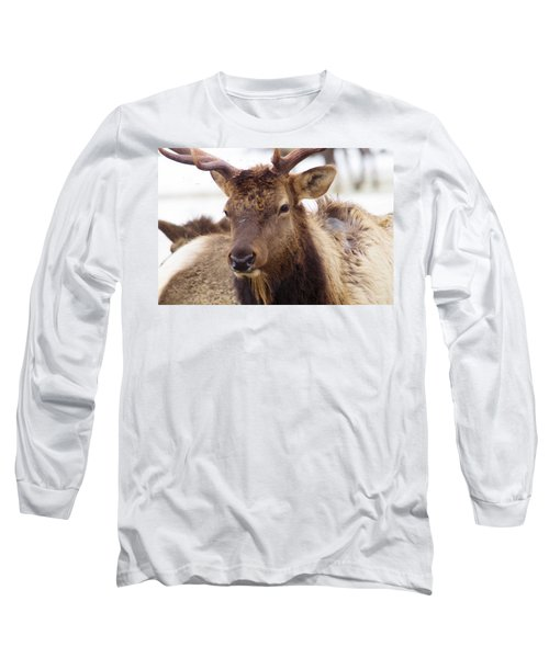 Long Sleeve T-Shirt featuring the photograph Gaze From A Bull Elk by Jeff Swan