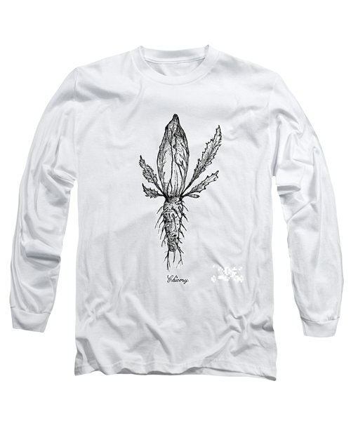 Hand Drawn Of Chicory Isolated On White Background Long Sleeve T-Shirt
