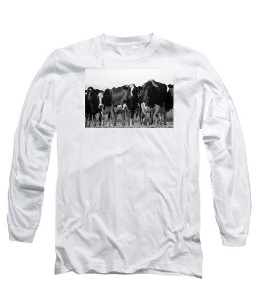 Curious Holsteins Long Sleeve T-Shirt