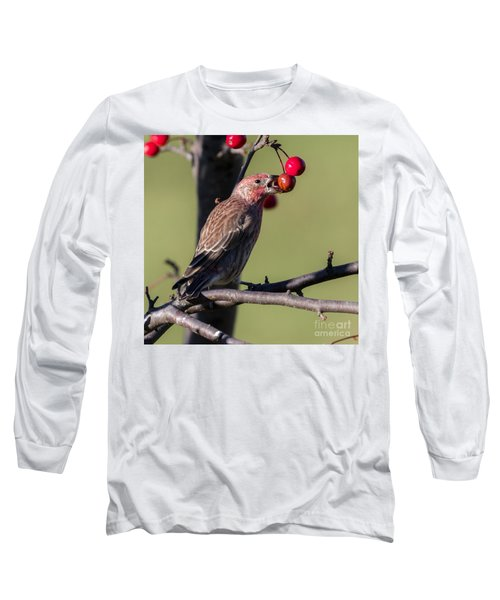 House Finch Vs Crabapple  Long Sleeve T-Shirt