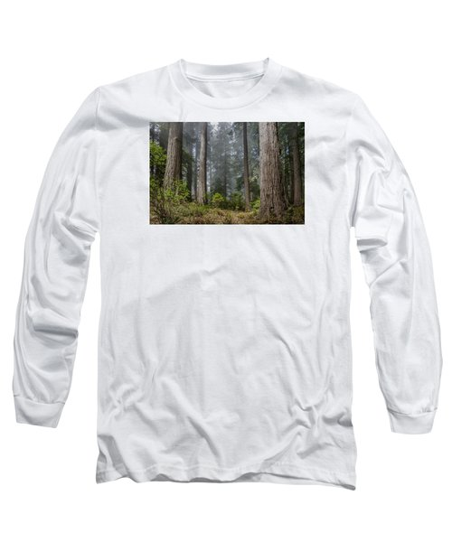 Into The Redwood Forest Long Sleeve T-Shirt by Greg Nyquist