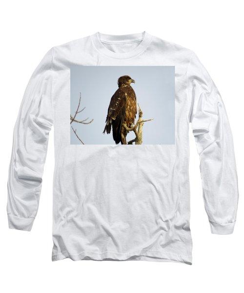 Juvenile Bald Eagle 1 Long Sleeve T-Shirt