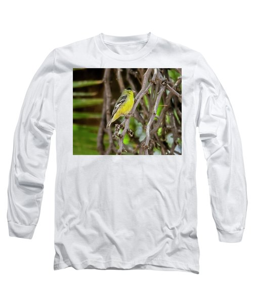 Long Sleeve T-Shirt featuring the photograph Lesser Goldfinch H57 by Mark Myhaver