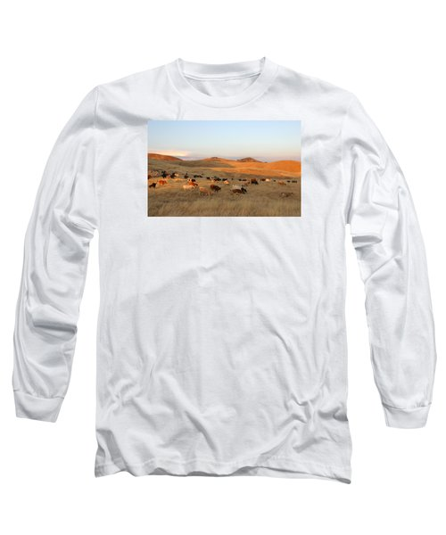Longhorns Long Sleeve T-Shirt by Diane Bohna