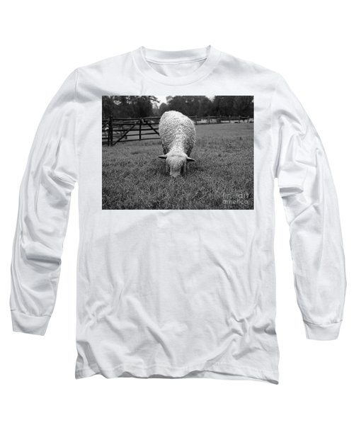 Longwool Sheep Grazing Long Sleeve T-Shirt