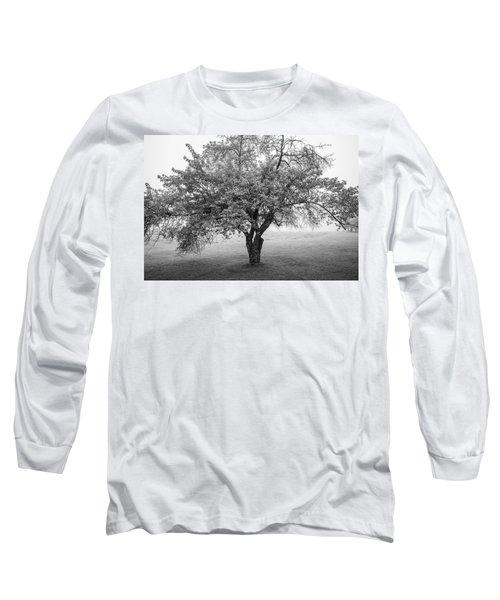 Maine Apple Tree In Fog Long Sleeve T-Shirt