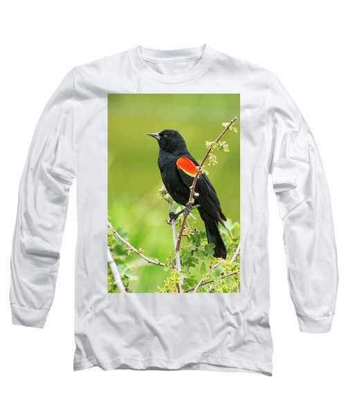 Male Red-winged Blackbird Long Sleeve T-Shirt by Belinda Greb