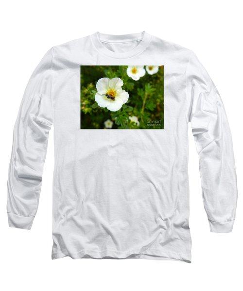 Massachusetts Carpenter Bee Long Sleeve T-Shirt