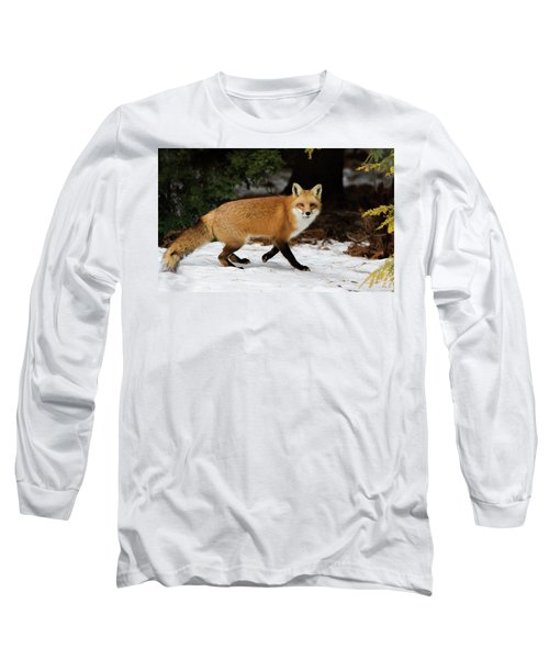 Long Sleeve T-Shirt featuring the photograph Mr Fox by Mircea Costina Photography