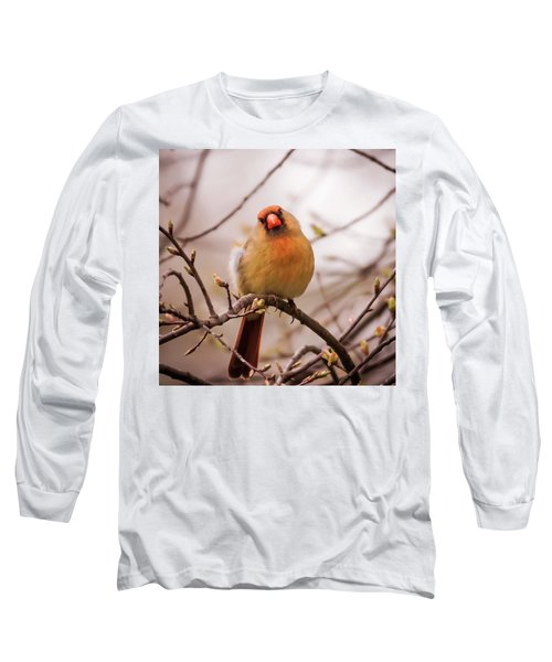 Long Sleeve T-Shirt featuring the photograph Northern Female Cardinal Pose by Terry DeLuco