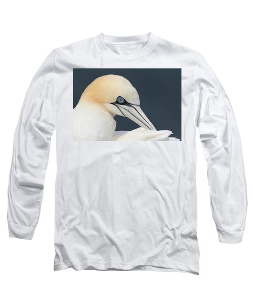 Long Sleeve T-Shirt featuring the photograph Northern Gannet At Troup Head - Scotland by Karen Van Der Zijden