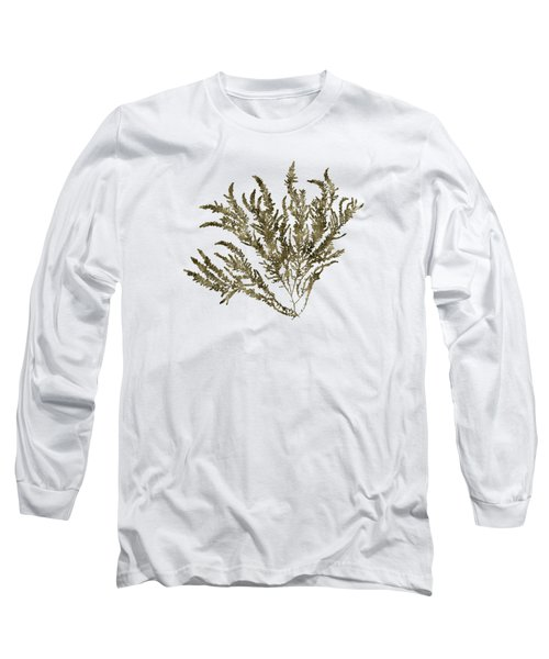 Long Sleeve T-Shirt featuring the mixed media Ocean Seaweed Plant Art Ptilota Sericea Square by Christina Rollo